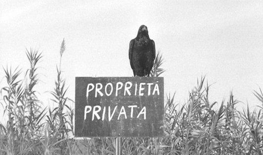 enricocer_uccell_proprieta